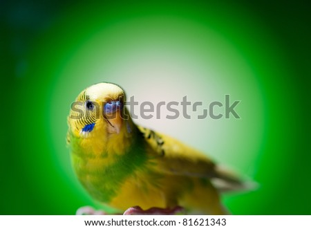 one parrot on green background - stock photo