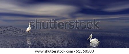 One pelican on the ocean swimming to another one standing on a island by night - stock photo