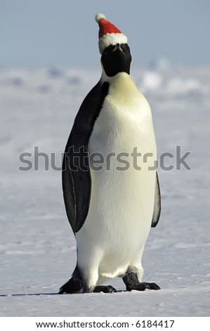 One penguin Christmas party - stock photo