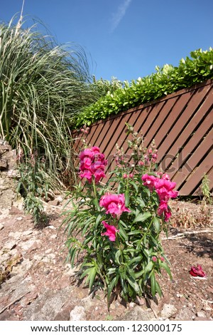 One pink flower in a rugged garden - stock photo
