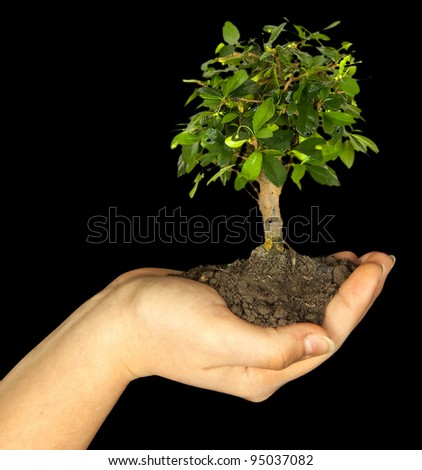 One plant in female hand on black background
