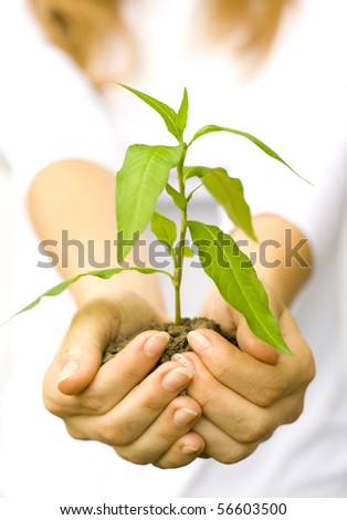 One plant in female hands on white background - stock photo