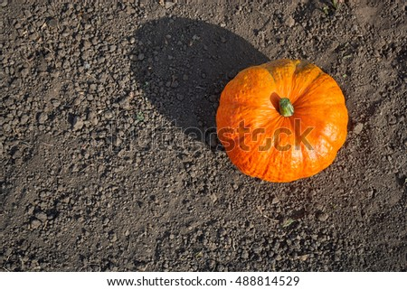 One pumpkin lying on the ground