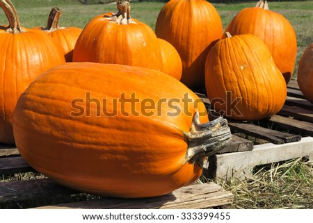 one pumpkin on its side - stock photo