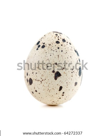 One quail egg. Isolated on white background - stock photo