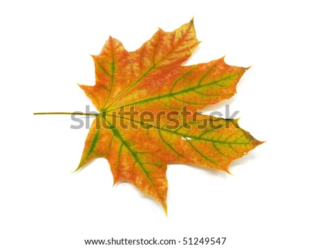 One red a green leaf with green proveins isolated on a white background - stock photo