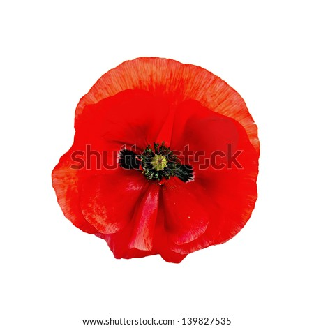 One red poppy isolated on white background - stock photo