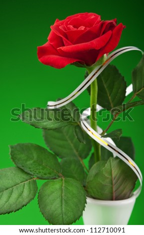 one red rose in vase on a green background - stock photo