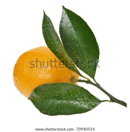 One ripe citrus isolated on a white background - stock photo