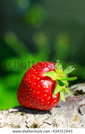 One ripe strawberries on a tree trunk in the garden, close-up view