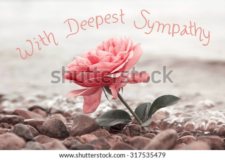 one rosy rose flower at the stony beach, text - with deepest sympathy - stock photo