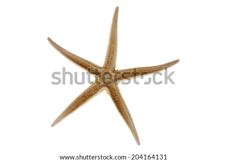 One sea star isolated on white - stock photo