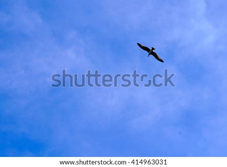 one seagull flying in the blue sky