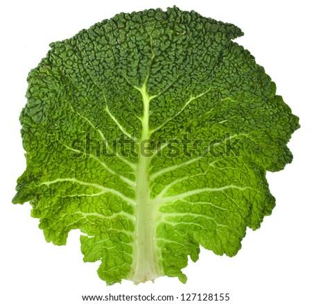 One Single Savoy Cabbage leaf close up surface  Isolated on White Background - stock photo