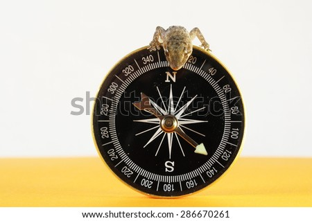 One Small Gecko Lizard and Compass on a colored Background - stock photo
