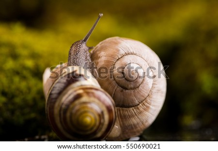 One small snail sitting on shell in it's natural environment.