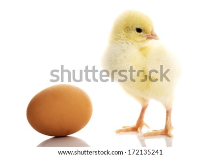 One small yellow separated chicken and egg. Isolated on white. - stock photo