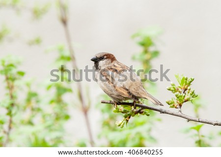 one sparrow sitting on a green branch - stock photo