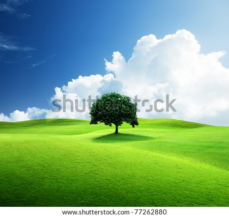 one tree and perfect grass field - stock photo
