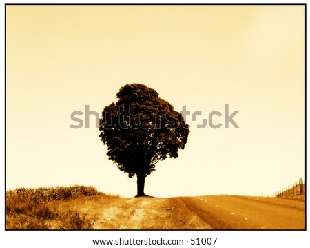 One tree hill - stock photo