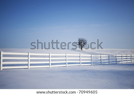 One tree in the middle of a snow covered field with a winding white fence. - stock photo