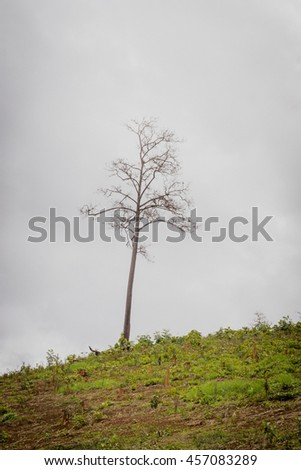 One tree on grassy hill. deforestation. conceptual for life. - stock photo