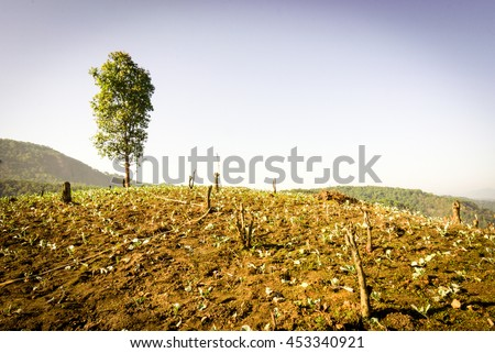 One tree on grassy hill. deforestation. conceptual for life. warm effect - stock photo