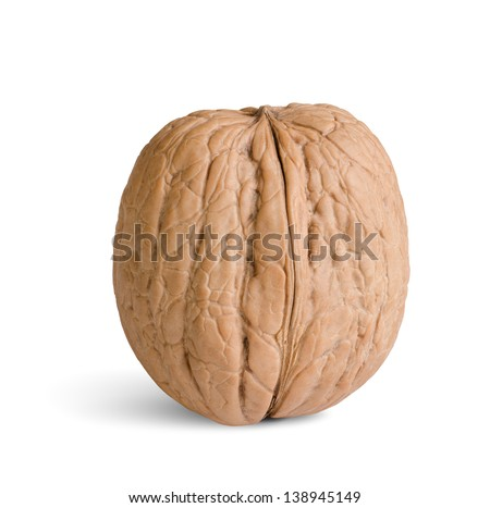 one walnut isolated on a white background - stock photo