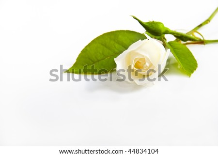 One white rose on a light background with space for text - stock photo