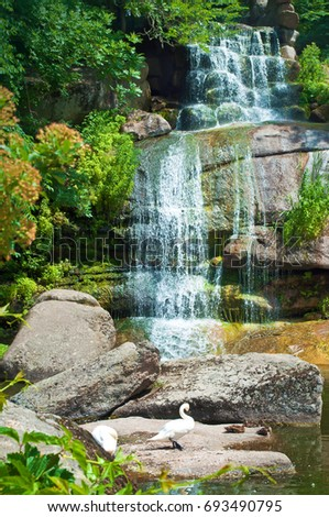 One white swan standing on a boulder on the background of a magnificent cascade waterfall among lush green trees. Sofiyivka park, Uman, Ukraine
