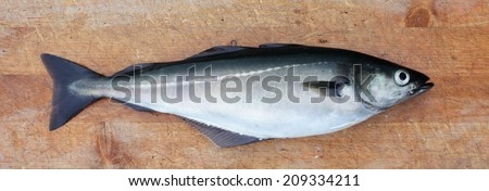 "One whole pollock / saithe on wooden cutting board. ""Sei"" in Norwegian.  - stock photo"