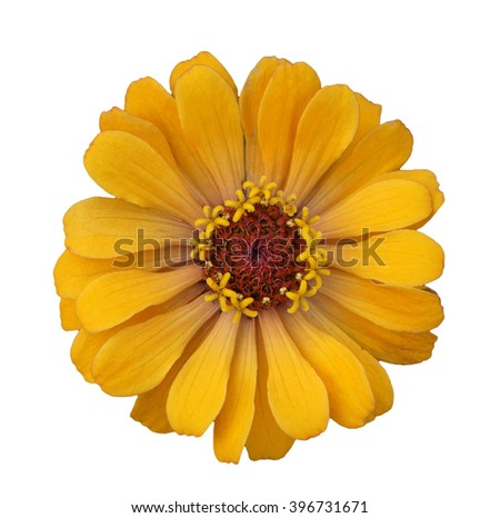 One Yellow flower isolated on white background - stock photo