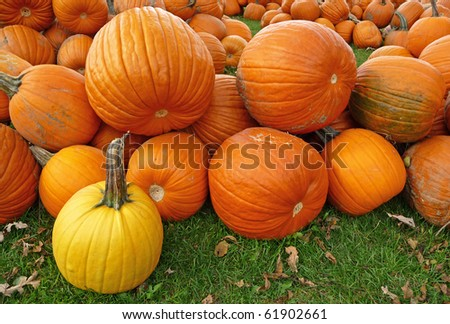 One yellow pumpkin - stock photo