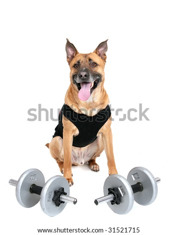 one young workout dog with weights over white
