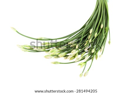 Onion flower isolated on white background - stock photo