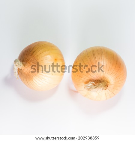 Onion isolated white background closeup