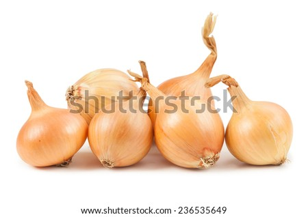 Onion on white background  - stock photo