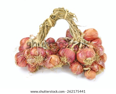onions isolated on white - stock photo