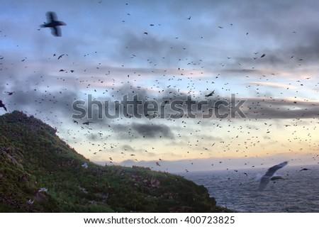 Oodles. Sunset over ocean Islands. Aleuts-Commander island ridge. Pacific ocean. Over Islands fly lot of birds - stock photo