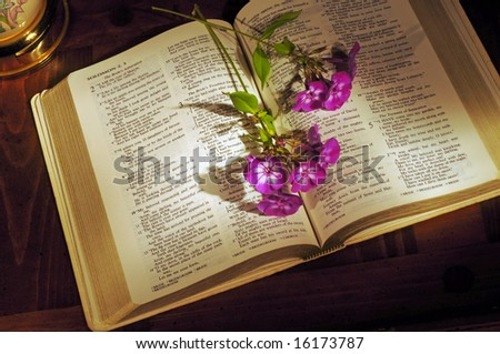 Open Bible on wooden desk with phlox stems and lamp base