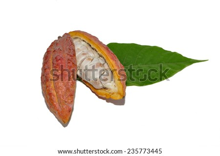 Open cocoa pod on a white background - stock photo