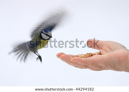 open hand and titmous - stock photo