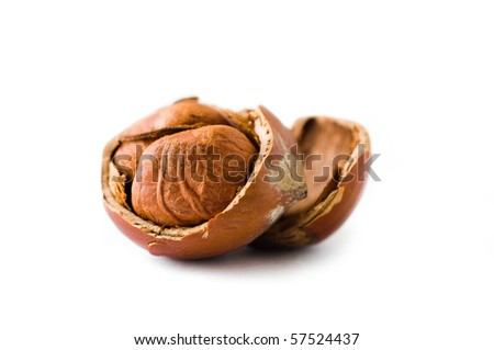 open hazelnut on white background - stock photo