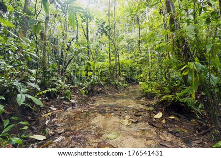 Open muddy clearing in Amazonian Rainforest, Ecuador, during the wet season. - stock photo