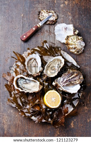 Open oyster Super Speciale with seaweed and ice on wooden background - stock photo