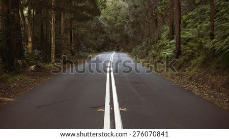 Open road in lush bush forest - stock photo