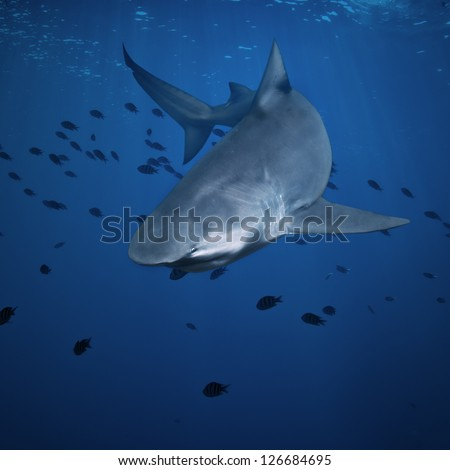 open water deep blue ocean and big angry hungry shark - stock photo