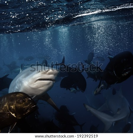 open water deep ocean and big angry hungry shark - stock photo