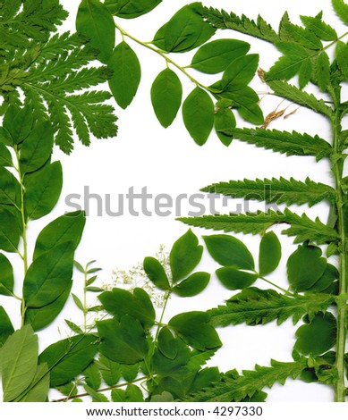 Open white space framed by natural green leaves background - stock photo