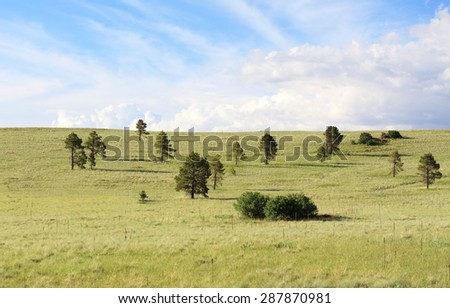 Open Yellow and green meadow with lush green trees and a bright blue sunny sky.  - stock photo